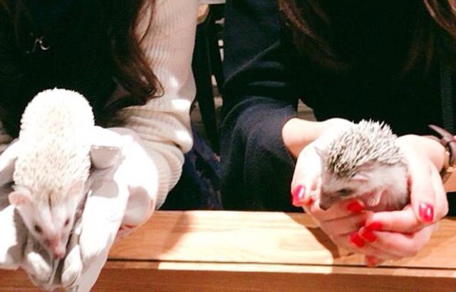 Relax大阪日興ビル店_ハリネズミカフェ