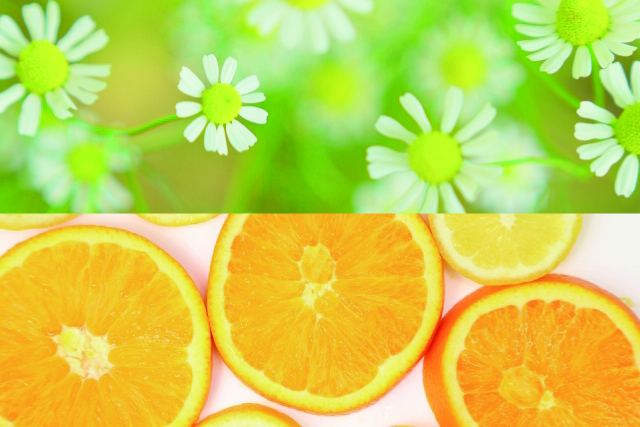 カモミール_オレンジ
